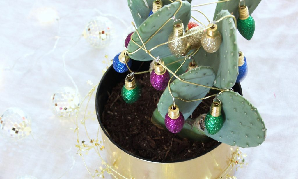 DIY Christmas Cactus
